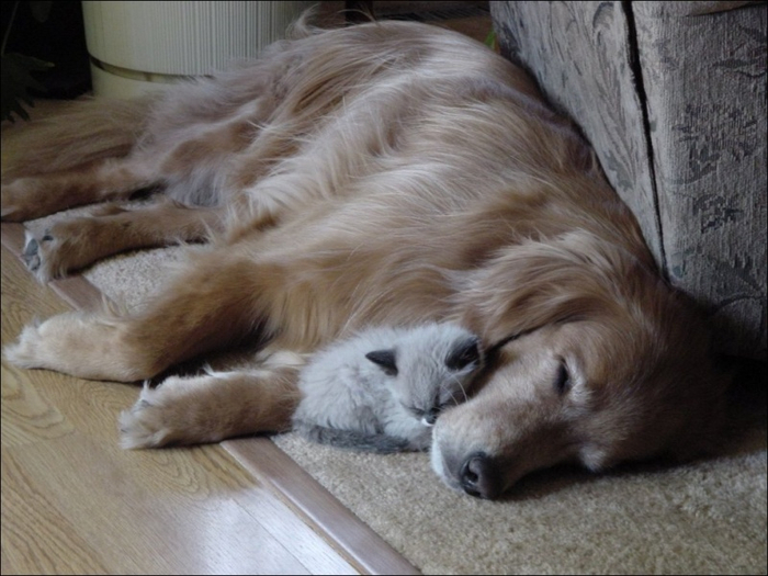 1395082938_cats-and-dogs-022 (700x525, 329Kb)