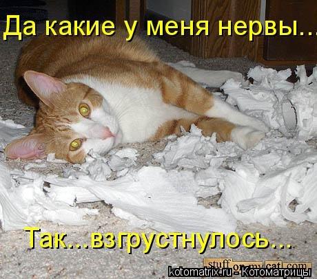 1395429917_kotomatricy-1 (460x406, 183Kb)