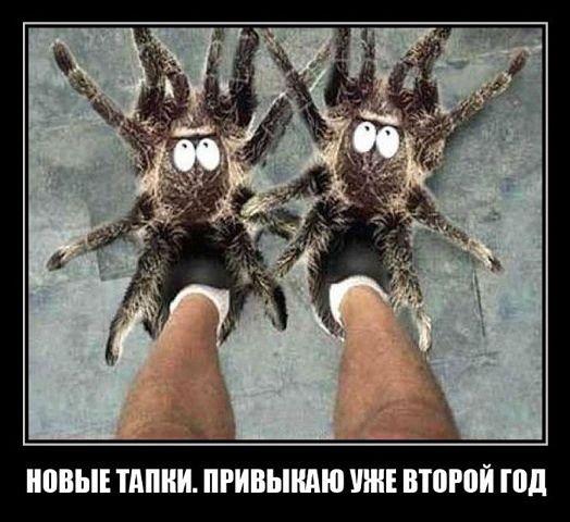 1395763396_pauchki (524x480, 49Kb)