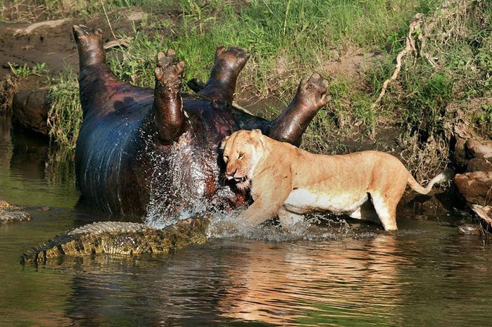 дикие животные фото 2 (700x465, 476Kb)