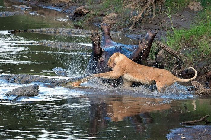 дикие животные фото 4 (700x465, 463Kb)