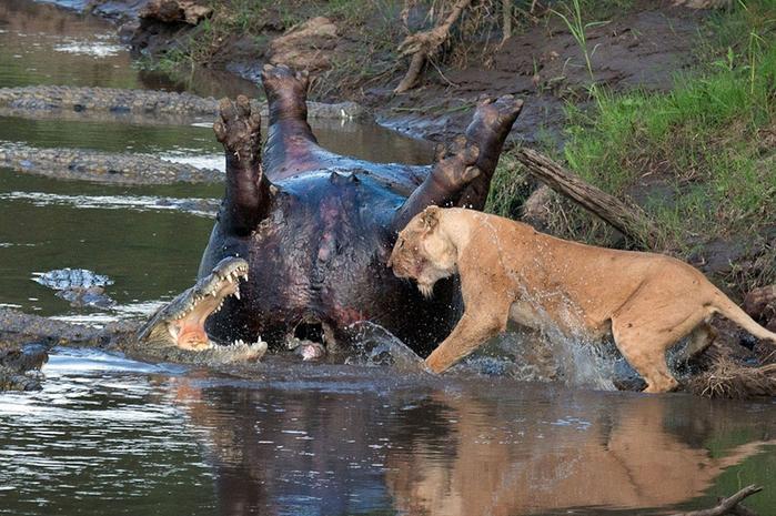 дикие животные фото 6 (700x465, 433Kb)