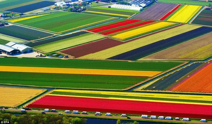 15Голландия, Поля тюльпанов1 (700x409, 396Kb)