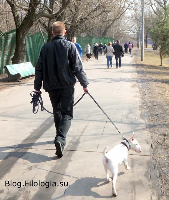 Собака боевой породы на поводке с хозяином в парке в Москве/3241858_dog00 (550x652, 213Kb)