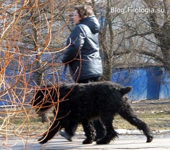 Собака на прогулке с хозяйкой в парке у метро Речной вокзал/3241858_dog02 (550x484, 176Kb)