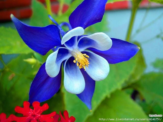 Flower-885330 (640x480, 173Kb)