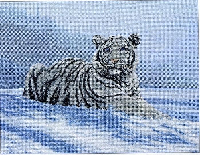 siberian Tiger (700x542, 303Kb)