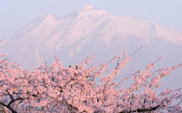 аромат цветов (600x375, 183Kb)