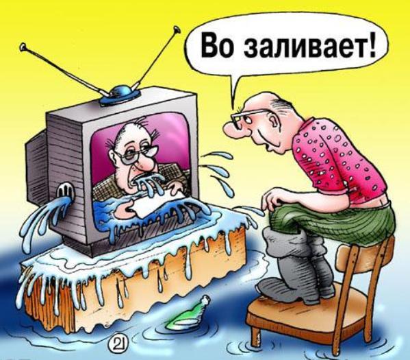 Как Путин перевербовал коалу - Цензор.НЕТ 7493