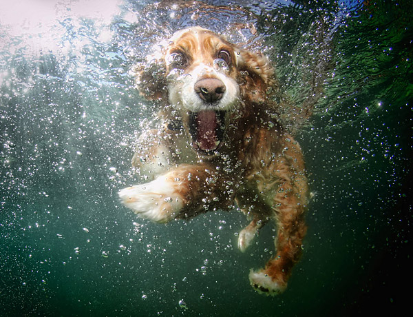 underwater-dog_seth-casteel_dog-16 (600x460, 134Kb)