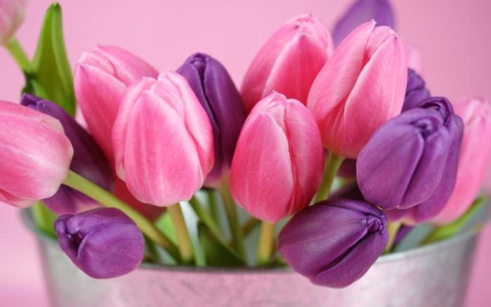 тюльпан 3 (700x437, 331Kb)