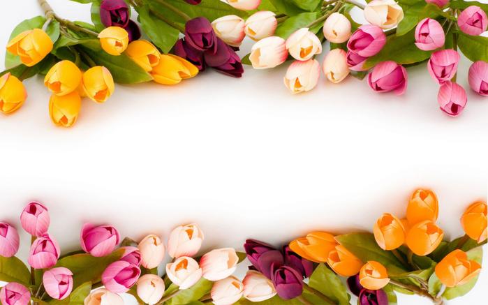 тюльпан 19 (700x437, 318Kb)