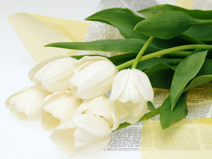тюльпан 24 (700x525, 346Kb)