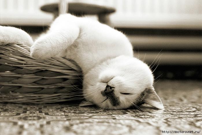спящие коты20 (700x466, 232Kb)