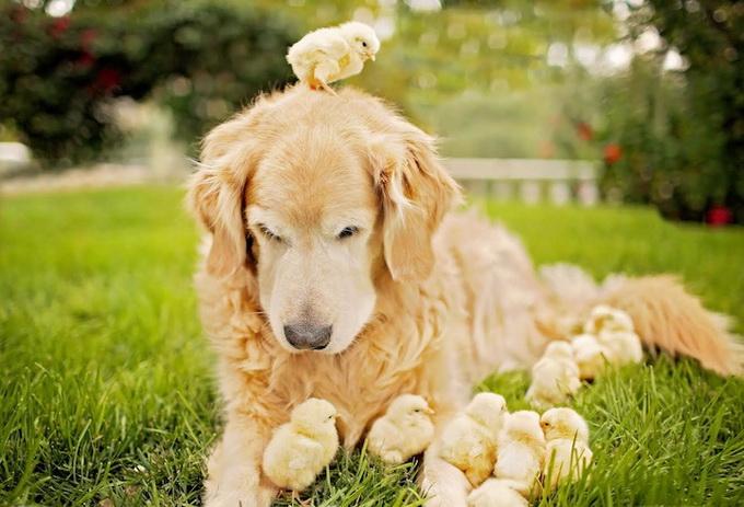 прикольные фото собак (680x463, 302Kb)