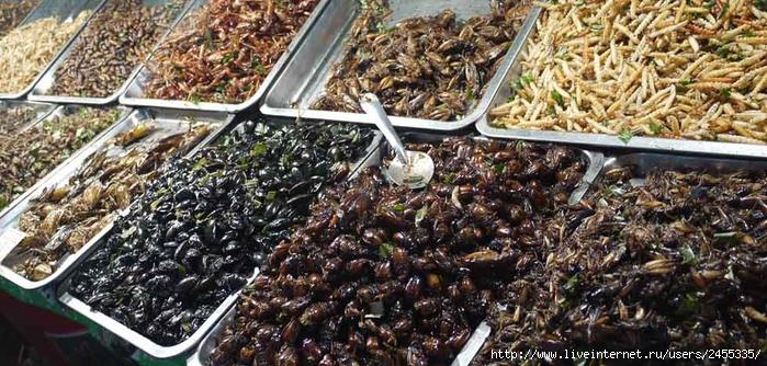 насекомые (700x334, 291Kb)