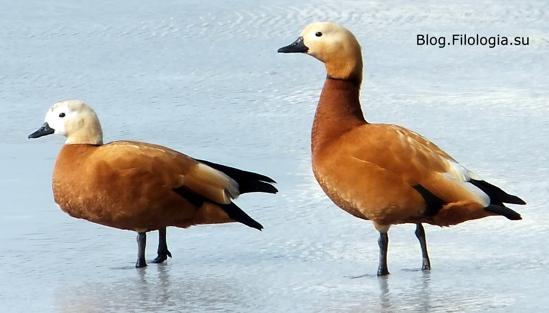 3241858_bird02 (549x313, 74Kb)