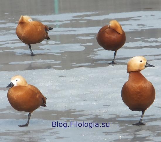 3241858_bird14 (550x485, 100Kb)