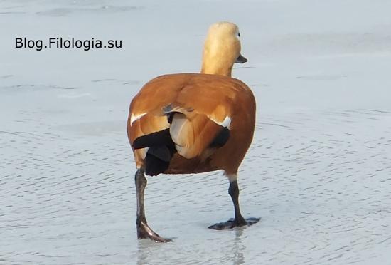 3241858_bird15 (550x372, 80Kb)