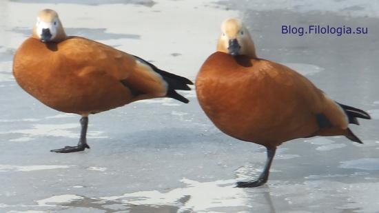 3241858_bird11 (550x309, 60Kb)