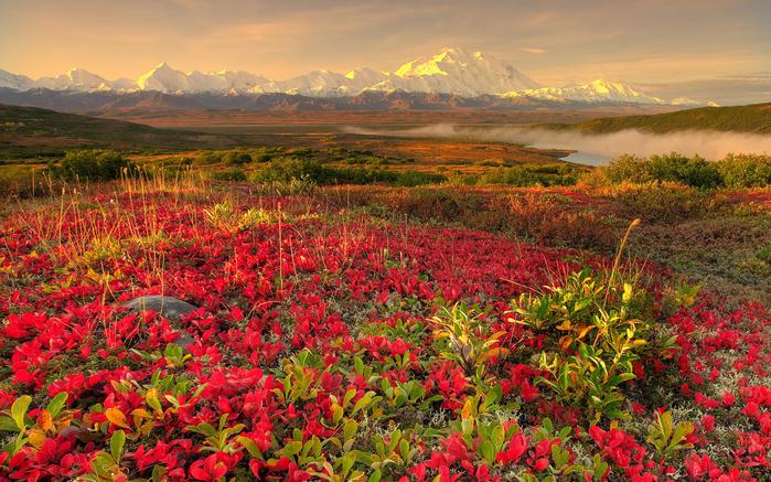 flower-field (700x437, 575Kb)