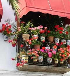 cvety_dlia_balkona (240x258, 13Kb)