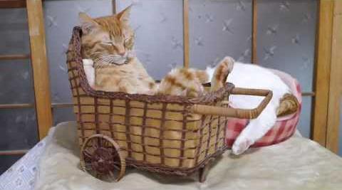 ленивый кот широнеко