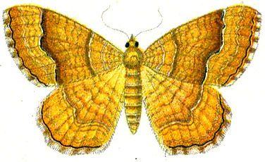 Бабочки и другие насекомые. Картинки для декупажа (7) (376x230, 126Kb)