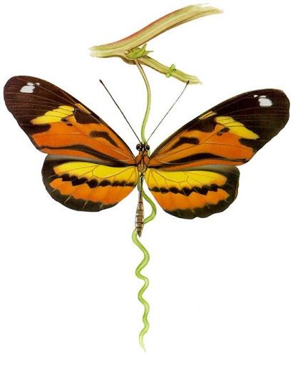 Бабочки и другие насекомые. Картинки для декупажа (9) (414x512, 102Kb)