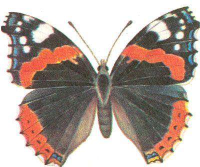 Бабочки и другие насекомые. Картинки для декупажа (13) (400x334, 131Kb)