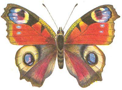 Бабочки и другие насекомые. Картинки для декупажа (17) (400x295, 113Kb)