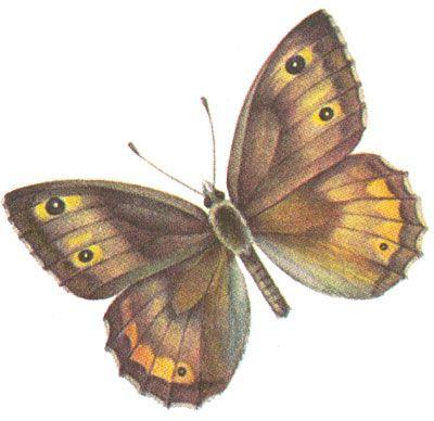 Бабочки и другие насекомые. Картинки для декупажа (19) (400x388, 99Kb)