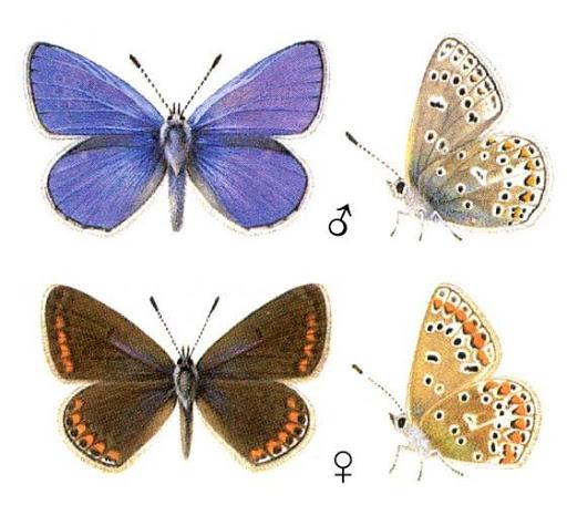 Бабочки и другие насекомые. Картинки для декупажа (28) (512x475, 176Kb)