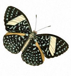 Бабочки и другие насекомые. Картинки для декупажа (30) (246x263, 50Kb)