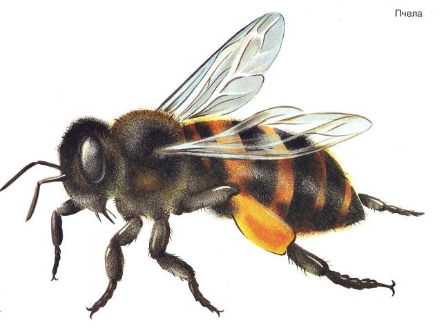 Бабочки и другие насекомые. Картинки для декупажа (32) (640x483, 173Kb)