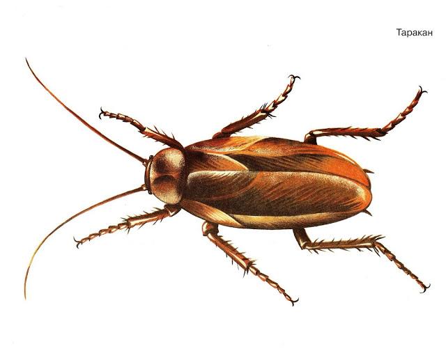 Бабочки и другие насекомые. Картинки для декупажа (34) (640x504, 133Kb)