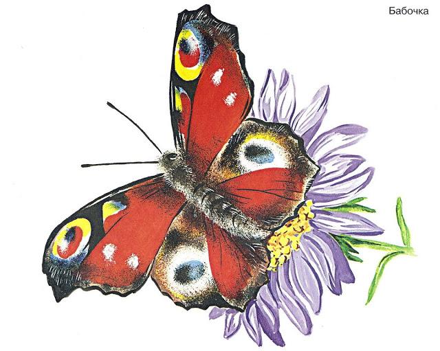 Бабочки и другие насекомые. Картинки для декупажа (36) (640x511, 261Kb)