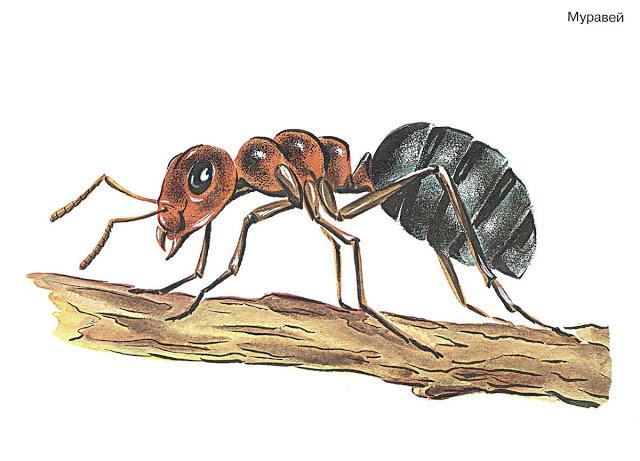 Бабочки и другие насекомые. Картинки для декупажа (38) (640x461, 183Kb)