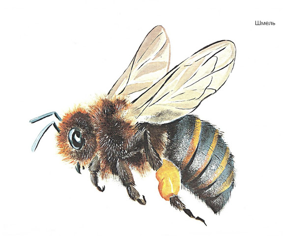 Бабочки и другие насекомые. Картинки для декупажа (40) (576x480, 170Kb)