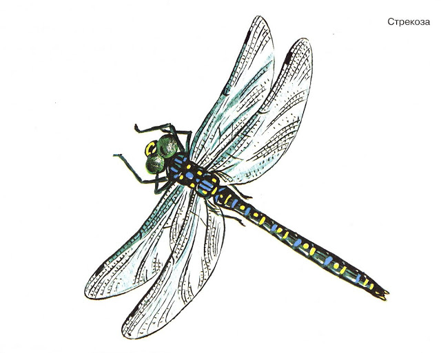 Бабочки и другие насекомые. Картинки для декупажа (42) (640x513, 150Kb)