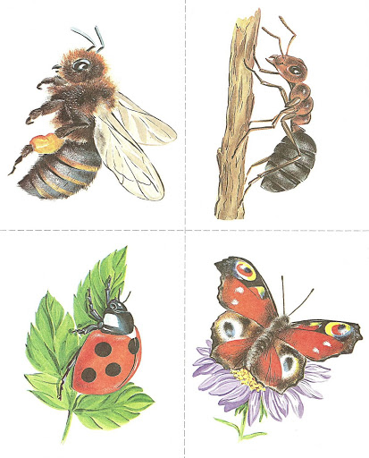 Бабочки и другие насекомые. Картинки для декупажа (43) (413x512, 164Kb)