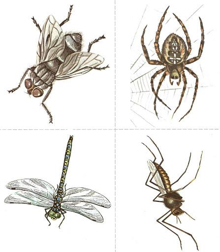 Бабочки и другие насекомые. Картинки для декупажа (46) (447x512, 138Kb)