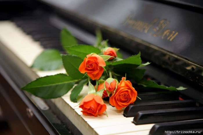 Цветы для успеха