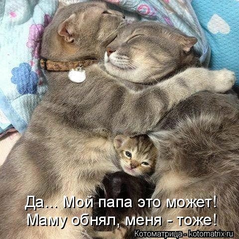 kotomatritsa_H (480x480, 144Kb)