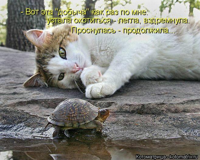 kotomatritsa_MJ (658x528, 253Kb)