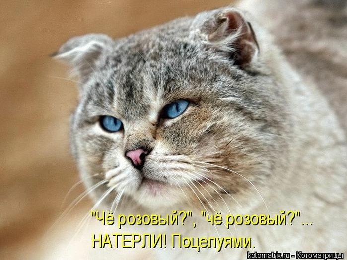 kotomatritsa_NF (700x525, 271Kb)