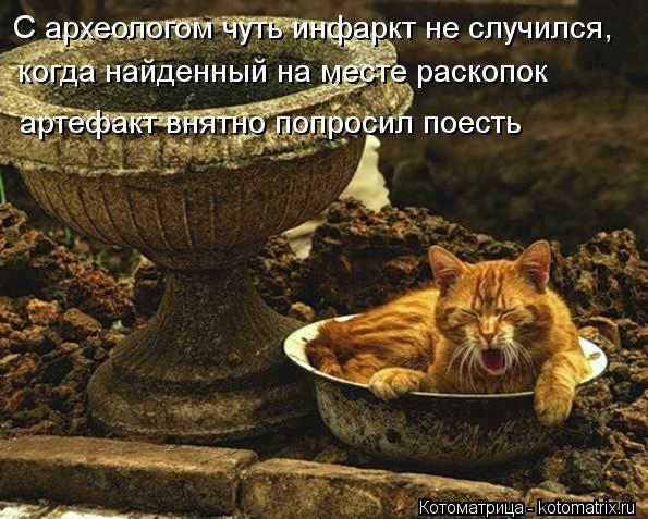 kotomatritsa_RMZ (595x477, 173Kb)