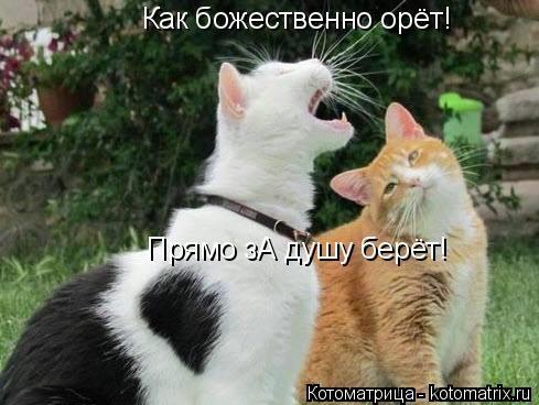 kotomatritsa_Ut6 (489x368, 90Kb)