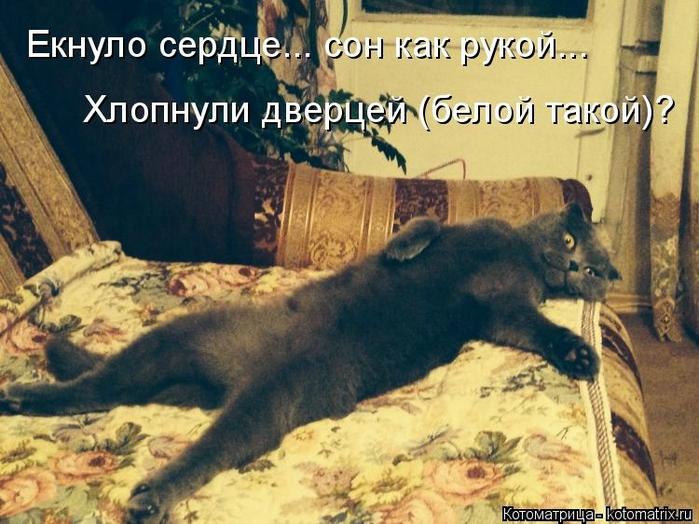 kotomatritsa_wQ (700x524, 286Kb)