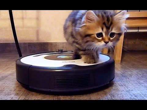 Куча мала котята